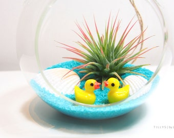 Cute Ducklings Air Plant/Tillandsia Terrarium Kit