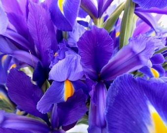 Purple Flowers Photograph, Palo Alto, California - Fine Art Nature Photography Print