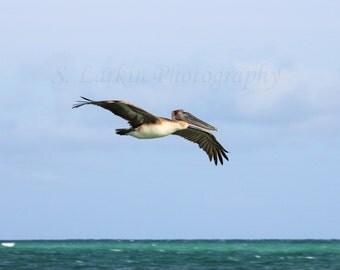 beach photography beachy photography bird photography fine art photography pelican photography nature photography wildlife photography birds