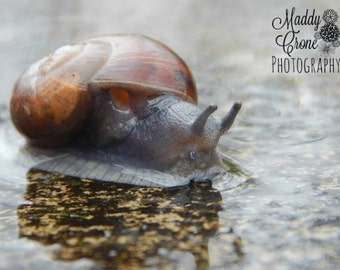 Snail Photograph, Snail in Water Photograph,  4 x 6