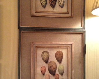 Pair of framed and matted prints Bird Eggs Nature  Nursery Art