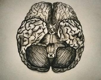 Anatomical Brain