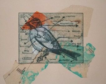 The Parts of a Bird, Intaglio etching