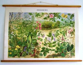 Botanical Art - Botanical Poster - Vintage Botanical - Botanical Chart - Botanical Wallpaper - Botanical Illustration
