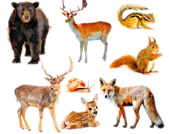 Woodland Animals Clipart Set - clip art set of woodland animals - bear, deer, fox, snail, squirrel, commercial use ok