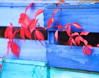 Red Ivy on Blue Crates