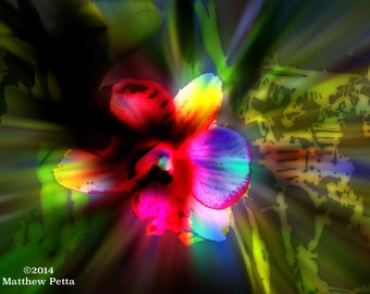 Chromatic Orchid