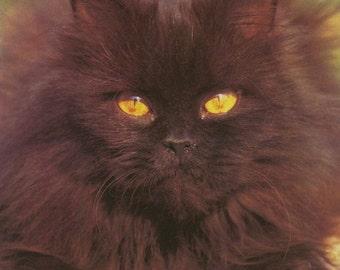 Vintage Book Image (1975): Long-haired Black Cat