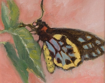 Original Oil Painting/art/painting/butterfly/home decor