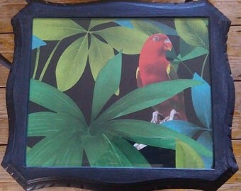 Gorgeous parrot in the jungle side table