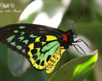 Butterfly 17-2