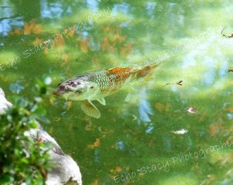 Fish-N-Around