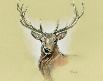 Red Deer   Original Drawing   11,4 x 11,4 inch   29 x 29 cm