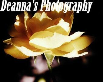 Yellow Shadow Flower by Deanna Bernal