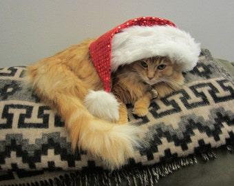 8x10 glossy photo of holiday cat