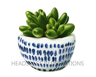 Potted Succulent Art  - White and Blue Pottery Colored Pencil Flower Botanical Print by Headspace Illustrations
