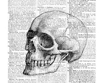 Webster's dictionary page with Skull, A4 8.5 x 11 inches print at home, digital download, vintage dictionary page, vintage skull, gothic art