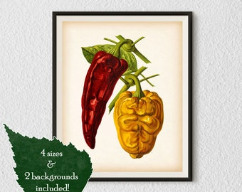 Vegetable art, Pepper print, Kitchen art print, Vegetable print, Kitchen prints vintage, Antique botanical print, Instant download, #27