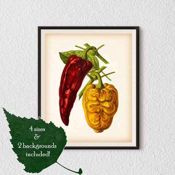 Kitchen Art Vegetables Print Botanicals Kitchen Art: Vegetable Art Pepper Print Kitchen Art By RestoredBotanicalArt