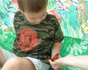 How to raise Monarch Butterflies, a guide using the Montessori Method