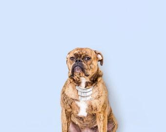 Postcard congratulations dog diamants