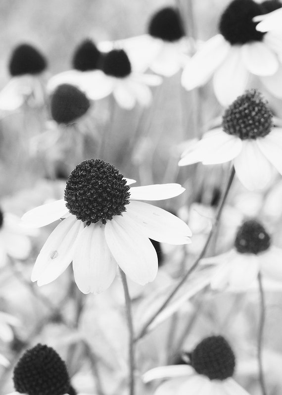 No. 012 | Black and white flower art wall photo print 8x10 11x14 16x20 gift present holiday christmas best top popular selling seller sale