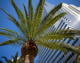 Downtown Los Angeles among Palm Trees and Skyscrapers