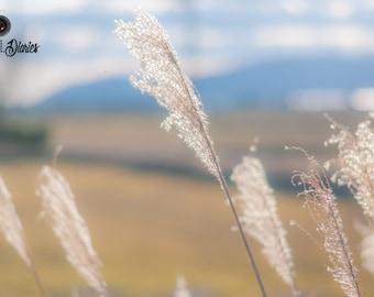 Wheat Crop Photo, Farm House Decor, Wheat Photograph, Nature Photography, Wheat Fields, Home Wall Art, Bamboo Panel, Standout, 15x30, 20x40