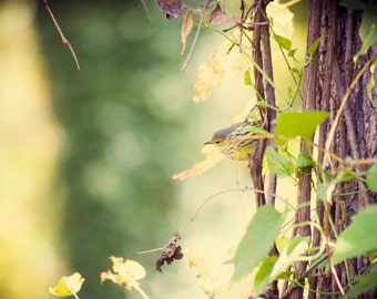 Fine Art Photography, Nature Print, Bird Photo