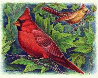 Note Cards - Cardinals (set of 5)