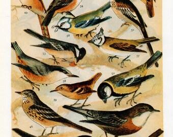 Vintage Small Bird Print - 1960's Double Sided Small Bird Print