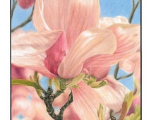 Colored Pencil Drawing of Magnolia 14x17