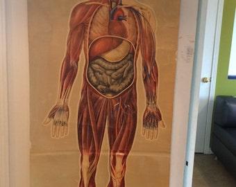 St.Johns ambulance general anatomy chart by J.Teck