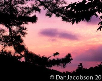 Purple Sky - Nature Photograph