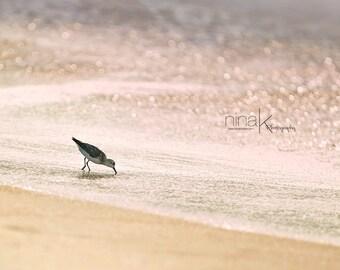 Sandpiper at Sunrise