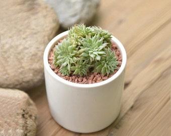 Big Shiny modern elegance White ceramic planter/Succulent Plant/flower planter pot have a drainage hole