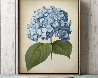 Blue Hydrangea art print, Hydrangea poster, Hydrangea print, antique Hydrangear wall art, cottage home decor, Botanical chart