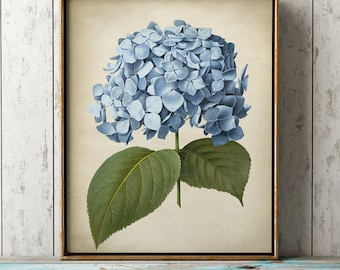 Hydrangea Wall Art hydrangea print | etsy