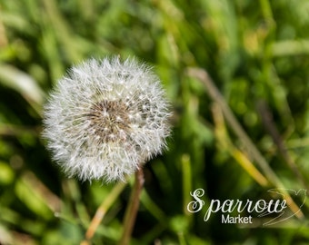 Dandelion, Summer Photography, Green