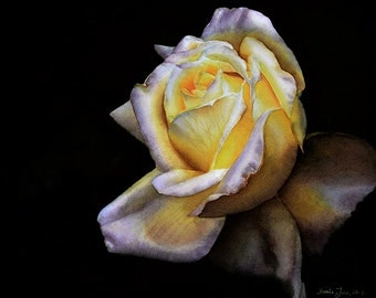 """Rose Elfe - Rose Painting in watercolor of a warm yellow Rose 16""""x20"""" by Doris Joa"""