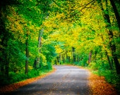 Fall in Wisconsin, Landscape Photography, Autumn Foliage, Wisconsin Decor, Woods, Forest, Road, Gold, Green, Nature Photo, Tree Canopy