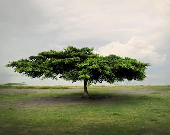 Lake Managua Tree