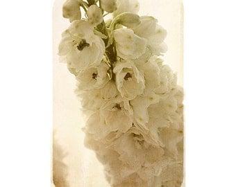 Sepia Print,  Flower Photography, Neutral Wall Art, Wedding Decor, White Delphinium