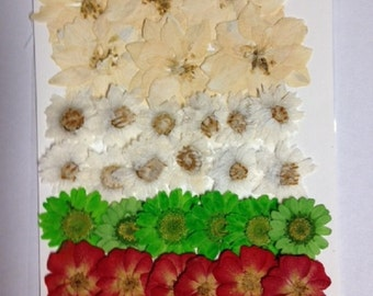 Real pressed flowers - Christmas card making kit