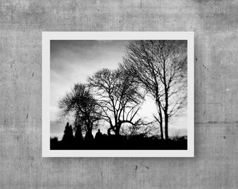 Woodland Winter Photo Forest Forest Photo Black And White Nature Photo Print