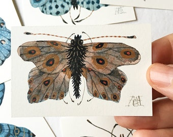 Butterfly SADALCHBIA, miniature small watercolor painting