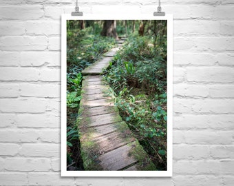 Pacific Northwest, Nature Photography, Forest Art, Olympic National Park, Washington State, Olympic Peninsula, Rainforest, Ozette, Trail