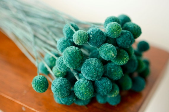Bunch of Turquoise Craspedia, Billy Balls, 30-40 stems, Billy Buttons, Yellow Dried decor, modern wedding, wedding decor