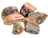 Opalized Wood Mineral Specimen LOT of 5 Natural play of color 18g