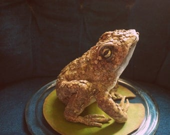 Faux taxidermy leather toad in glass dome